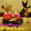 Cindy + Baja
