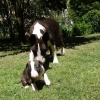 Bája Little Bull