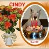 Cindy Od Výří skály
