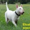 Elizabeth Little Bull
